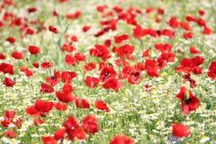 Wild flowers meadow spring scene Stock Image