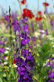 Wild flowers on meadow Royalty Free Stock Image