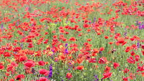 Wild flowers meadow stock footage