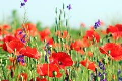 Wild flowers meadow Royalty Free Stock Photo