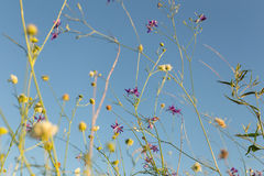 Wild flowers at the meadow Stock Photography