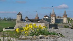 Wild flowers and an old fortress. Wild flowers and Medieval fortress in Kamenetc-Podilsky, Ukraine stock footage