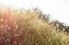 Wild flowers in the morning sun Stock Images