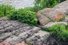 Wild flowers and moss-covered boulders near the river Stock Photography