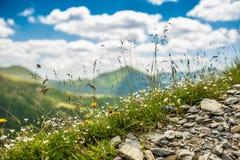 Wild flowers Stock Photography