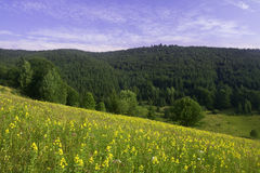 Wild flowers on a mountain pasture Royalty Free Stock Photography