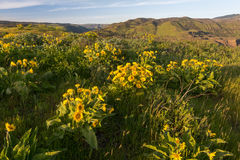 Wild flowers at mountain plateau Stock Photos