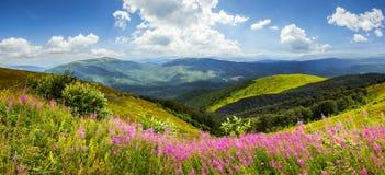 Wild flowers on the mountain top Stock Photos