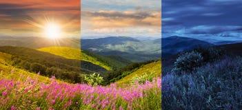 Wild flowers on the mountain top Stock Photo