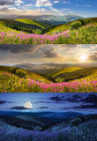 Wild flowers on the mountain top Stock Images
