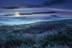 Wild flowers on the mountain top at night stock image