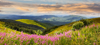 Wild flowers on the mountain top at sunrise stock photos