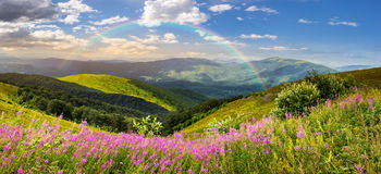 Wild flowers on the mountain top at sunrise Stock Photo