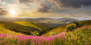 Wild flowers on the mountain top at sunset Stock Images