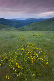 Wild flowers on the mountain top at sunset Stock Photography