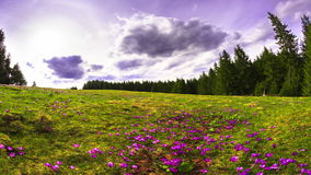 Wild flowers in mountains. Time Lapse. stock video