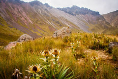 Wild flowers in a moutain Stock Images