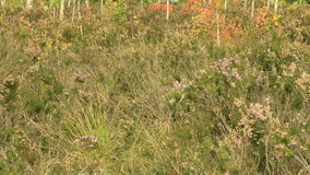 Wild flowers in the national swamp reserve. Autumn daytime. Smooth dolly shot stock footage