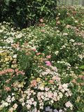 Wild flowers. Nature outdoors pretty Stock Image