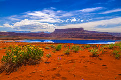 Wild Flowers near Evaporation Ponds - Potash Road in Moab Utah. Wild Flowers near Evaporation Pools with La Sale Mountains in the Back against beautiful blue sky royalty free stock photos