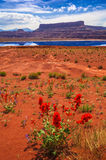 Wild Flowers near Evaporation Ponds - Potash Road in Moab Utah Stock Images
