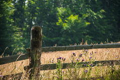 Wild flowers near old wooden fence Royalty Free Stock Photos