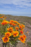 Wild Flowers With Ocean Background Stock Photos