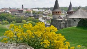 Wild flowers and an old fortress. Wild flowers and Medieval fortress in Kamenetc-Podilsky, Ukraine stock video footage