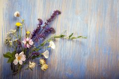 Wild flowers on old grunge wooden background chamomile lupine d. Wild flowers on old grunge blue wooden background chamomile lupine dandelions thyme mint bells Royalty Free Stock Photography