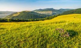 Wild Flowers On Rural Hillside Stock Image