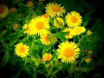 Free Wild Flowers On The Prairie Stock Image - 192651531