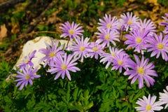 Wild flowers Royalty Free Stock Photo