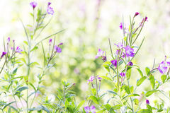 Wild Flowers Photographed with High Key Lighting Royalty Free Stock Photo