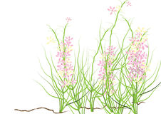 Wild flowers ,pink and purple wild flower  for background, Royalty Free Stock Photo