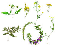 Wild flowers and plants Stock Photography
