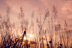 Wild flowers and plants in sunset Royalty Free Stock Photography