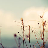 Wild flowers and plants in sunset Royalty Free Stock Photos