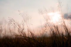 Wild flowers and plants in sunset Royalty Free Stock Photo