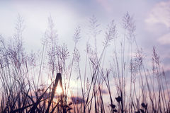 Wild flowers and plants in sunset, Royalty Free Stock Images