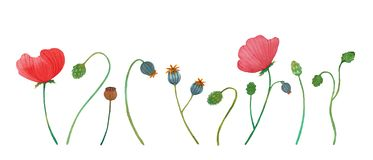 Wild flowers poppy watercolor pattern illustration seamless stock photo