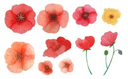 Wild flowers poppy watercolor pattern illustration seamless stock photography