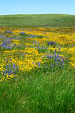 Wild flowers on prairie Stock Photography