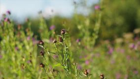 Wild flowers. stock footage