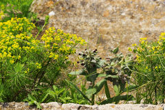 Wild flowers on the rock background Stock Images