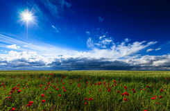 Wild flowers and rural fields in summer under storm sky Stock Photos