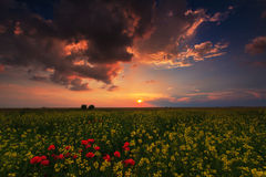 Wild flowers and rural fields in summer under storm sky Royalty Free Stock Image