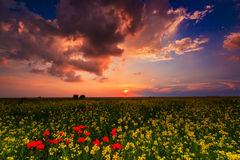 Wild flowers and rural fields in summer under storm sky Stock Images