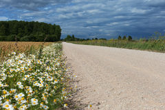 Wild flowers and rural road. Royalty Free Stock Photography