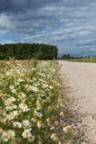 Wild flowers and rural road. Royalty Free Stock Image