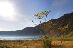Wild flowers on savanna royalty free stock photo